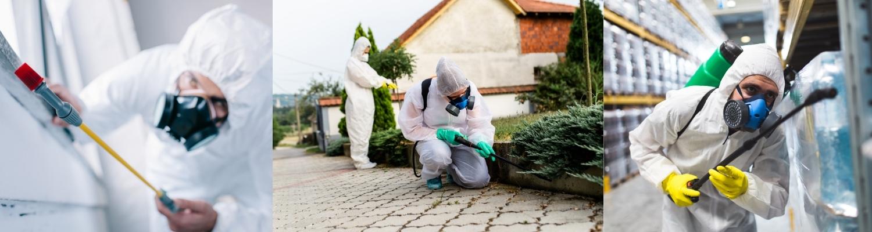 Control y manejo de plagas urbanas